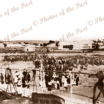 SS LANDSDOWN TOWER unloading 312 camels at Pt Augusta, SA 1897