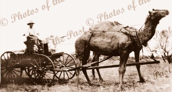 2 camel team, Royal Mail, Yudnapinna Stn to Farina SA, South Australia, c1900