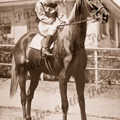 'Peter Pan' winner of Melbourne Cup, 1932 & 1934, c1934. horse racing