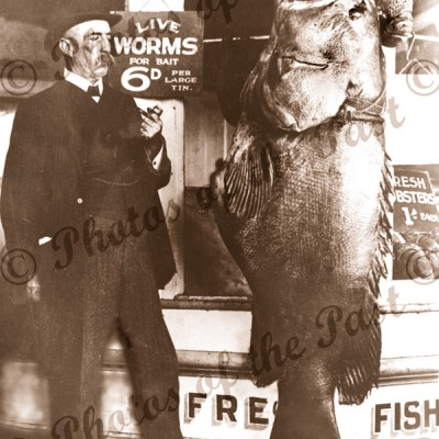 Bait for the Big One, Murray Cod, Fish. 1909