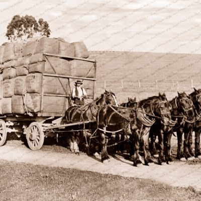 A load of wool from Appakaldree (horse drawn)Hat Flat Rd,Normanville, SA. 1910s. South Australia.