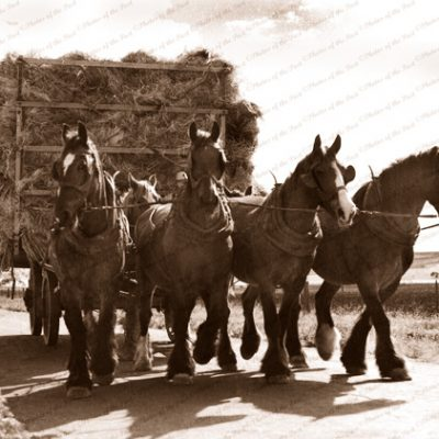 Hauling the hay, horse team with wagon of hay, 1930s