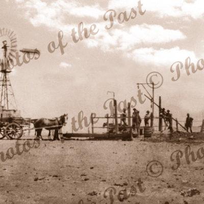 Carting water, Pt Neill, SA. South Australia. Horses, windmills