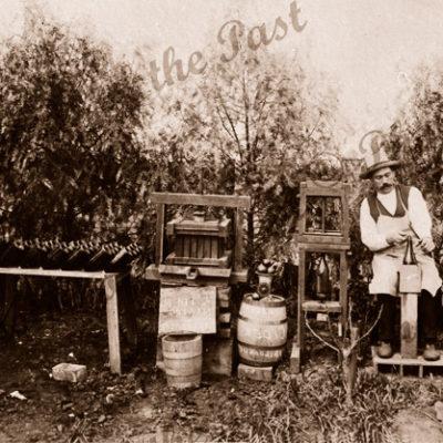 L. Foureur of Mitcham, SA. Demonstrating making apple cider. c1910s. South Australia