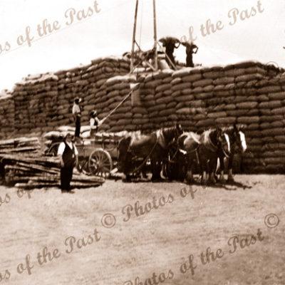 Stacking wheat, Yorke Peninsula, SA. 1930s. South Australia. Horse and cart