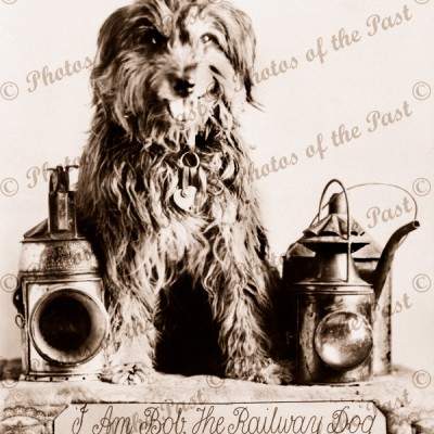 Bob the Railway Dog (1878-1895) at Terowie SA South Australia 1899