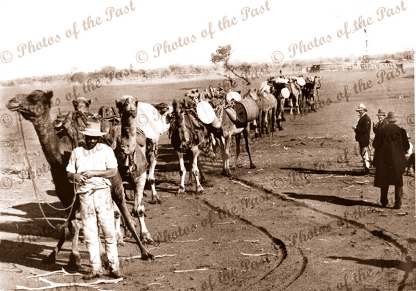 Camels carting water - Trans Australia Railway construction 1912