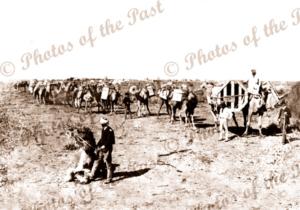 Laden camel train, construction overland telegraph 1871