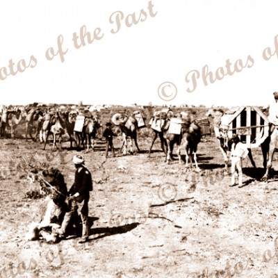 Laden camel train, construction overland telegraph 1871