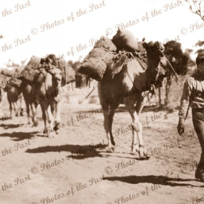 Afghan Camel Train, far north South Australia 1920s