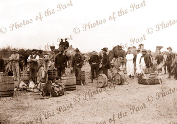 Pack camels & cargo Commonwealth Railways Construction. Port Augusta, South Australia 1912