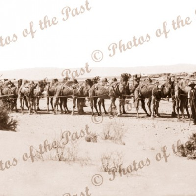 Camel team and wagon. Port Augusta SA to Perth WA 1907 South Australia Western Australia