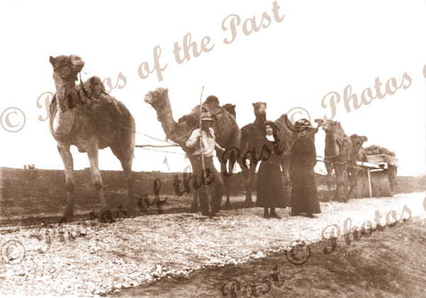 Road making. Seven camels hauling a road roller. Ladies nearby c1900s