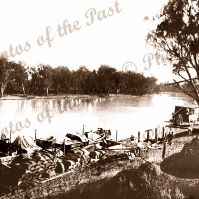 Loaded barges at Loxton SA South Australia c1910