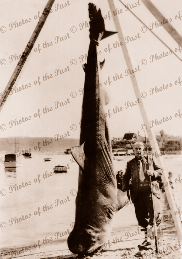 World record shark caught by Zane Grey, Sydney Heads, NSW. 10 April 1936. New South Wales 1936