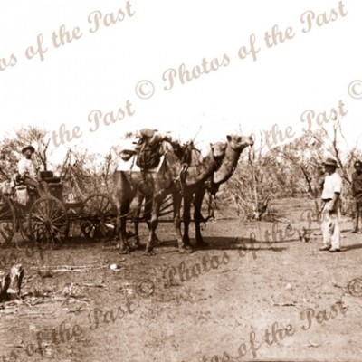 Camel pair buggy with Aborigines nearby
