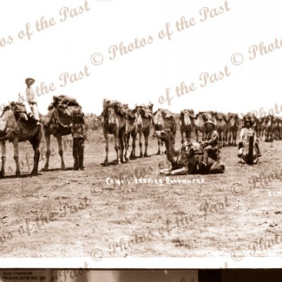 Camel Train leaving Roebourne WA. Weatern Australia