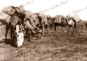 Afghan Cameleer and pack camels