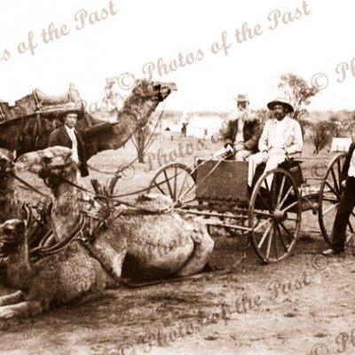 Camel pair buggy & others