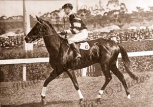 Phar Lap the wonder 3 year old. Melbourne. Vic. Victoria. Horse Racing. Jockey