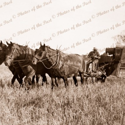 4 horse team & Sunshine Harvester 1920s