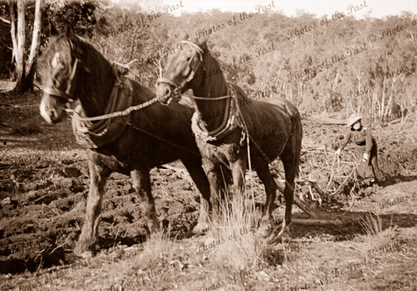Woman ploughing with two horse team. c1890s