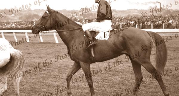 'RUSSIA' winner of Melbourne Cup, Vic. Jockey, D.Monroe. Horse racing. Flemington. Victoria.1946