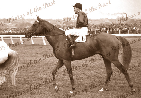'RUSSIA' winner of Melbourne Cup, Vic. Jockey, D.Monroe. Horse racing. Flemington. Victoria.1946
