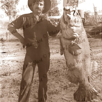 One that didn't get away - 105lb Murray Cod at Swan Reach, 1911. Victoria. Fishing.