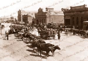 Bullock teams at Broken Hill, NSW. April 1913. New South Wales.