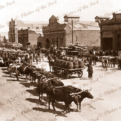 Bullock teams at Broken Hill, NSW. April 1913. New South Wales.