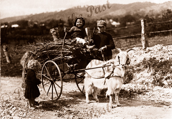 Billygoat cart with load of sticks, children. c1910s