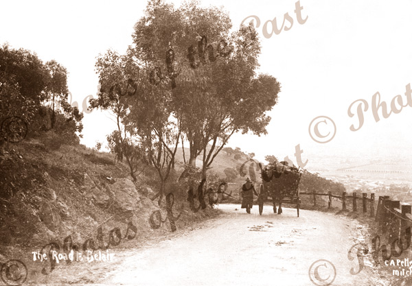 Going down Old Belair Rd, Adelaide, SA. c1910. Horse and carriage