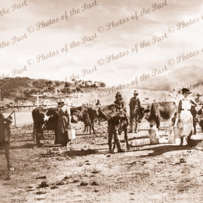 Dairy maids tending their herd in Pichi Richi Pass, SA. Devil's Prak in background. 1890s. South Australia. Flinders Rangers.