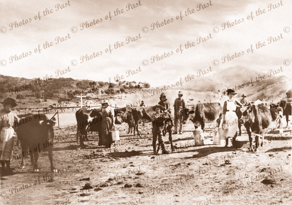 Dairy maids tending their herd in Pichi Richi Pass, SA. Devil's Prak in background. 1890s. South Australia. Flinders Rangers.
