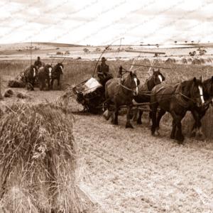 3 & 4 horse team binders at work, 1930s
