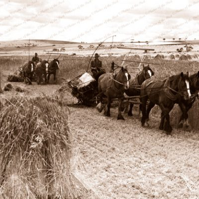 3 & 4 horse team binders at work, 1930s