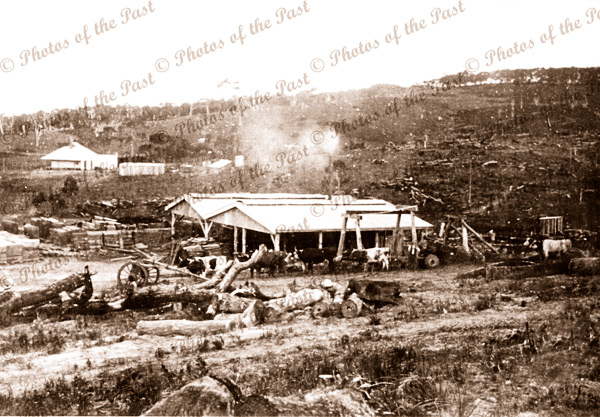 Sawmill, Hindmarsh Tiers SA. c1915. South Australia. Forestry