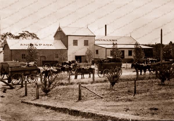 Angas Park Distillery, SA. 1910. Horse & carts. South Australia