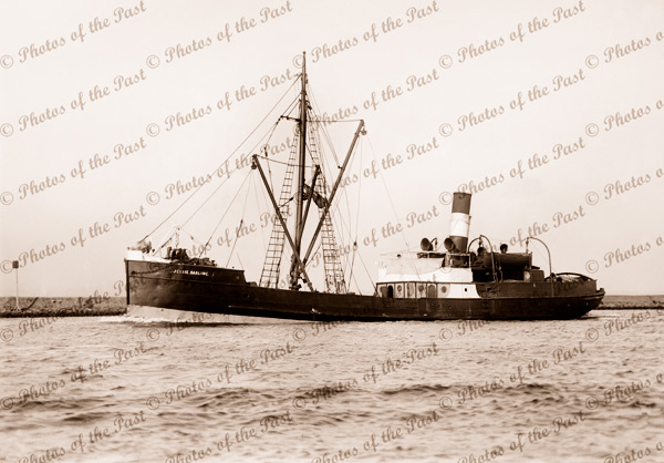 SS JESSIE DARLING 1885 - 1919. Built in Scotland, 1884. Later SS COORABIE. Shipping