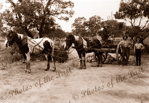 Road making. Two horses & cart dumping stone onto road. 1901