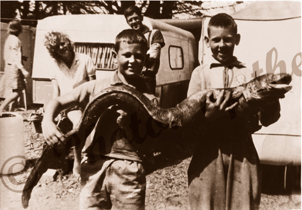Record eel, caught Second Valley, S.A. Jeff Francis & Barry Thompson. 1962. South Australia