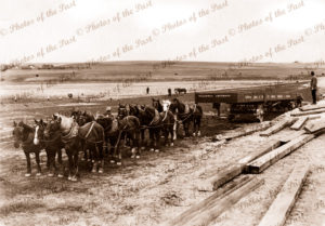 12 horse team hauling abutment for Onkaparinga River Railway Bridge, SA.1914. South Australia