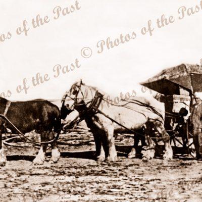 Mullah Singh & his hawker van near Kerang/Swan Hill, Victoria. Horses
