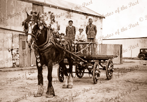 Foster brothers (boys) on W. Gibbs carrier dray with decorated horse. 1940s