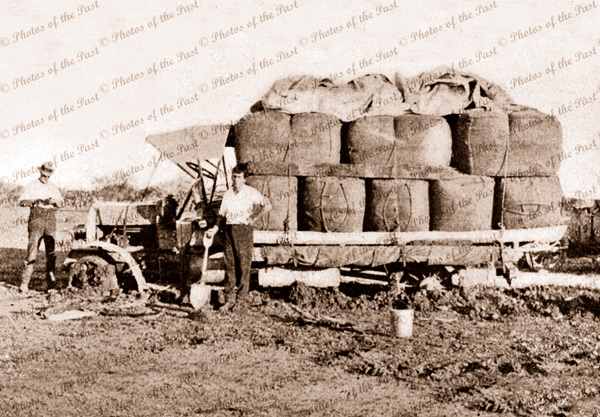 Bogged truck with wool bales, c1906