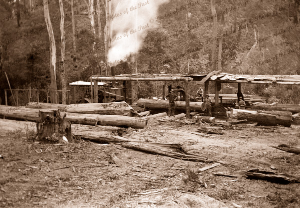 Felled timber being processed at sawmill. c1910
