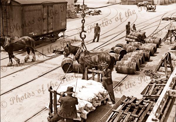 Loading meat, Port Adelaide, SA. Horses, barrels, c1940. South Australia