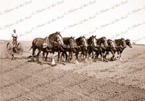 8 horse team preparing for seeding (scarifying). c1930s
