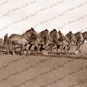 8 horse team pulling plough, c1940s